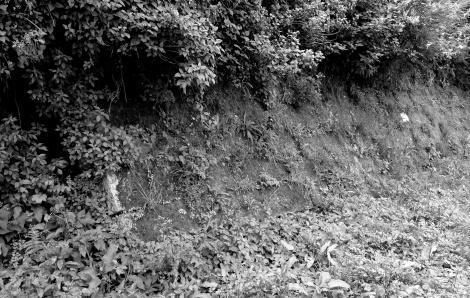 Restos de un muro y vegetación antes del túnel