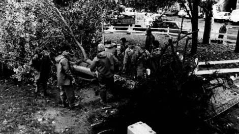 Un árbol arrancado en el Berbés durante el Hortensia. Fotografía La Voz de Galicia